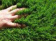 Comment avoir une belle pelouse ?